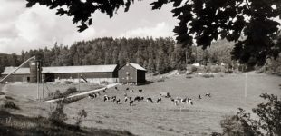 Bodane gård