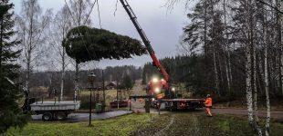 Åmåls julgran hämtades i Tranerud